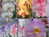 prekmurje-orhideje